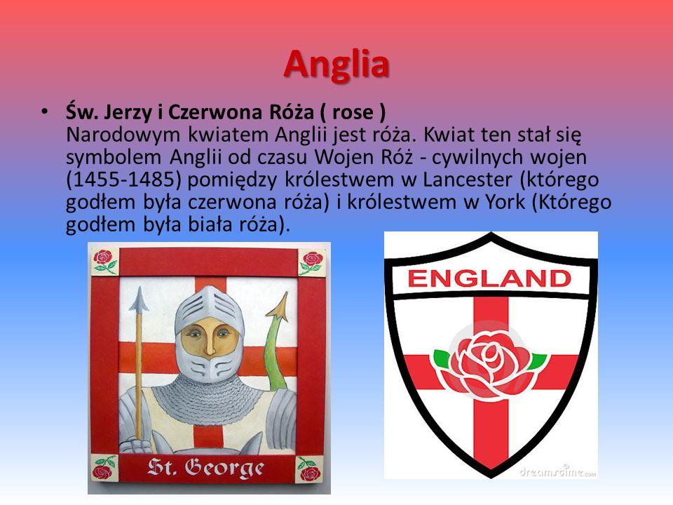 Anglia Św.Jerzy i Czerwona Róża ( rose ) Narodowym kwiatem Anglii jest róża.