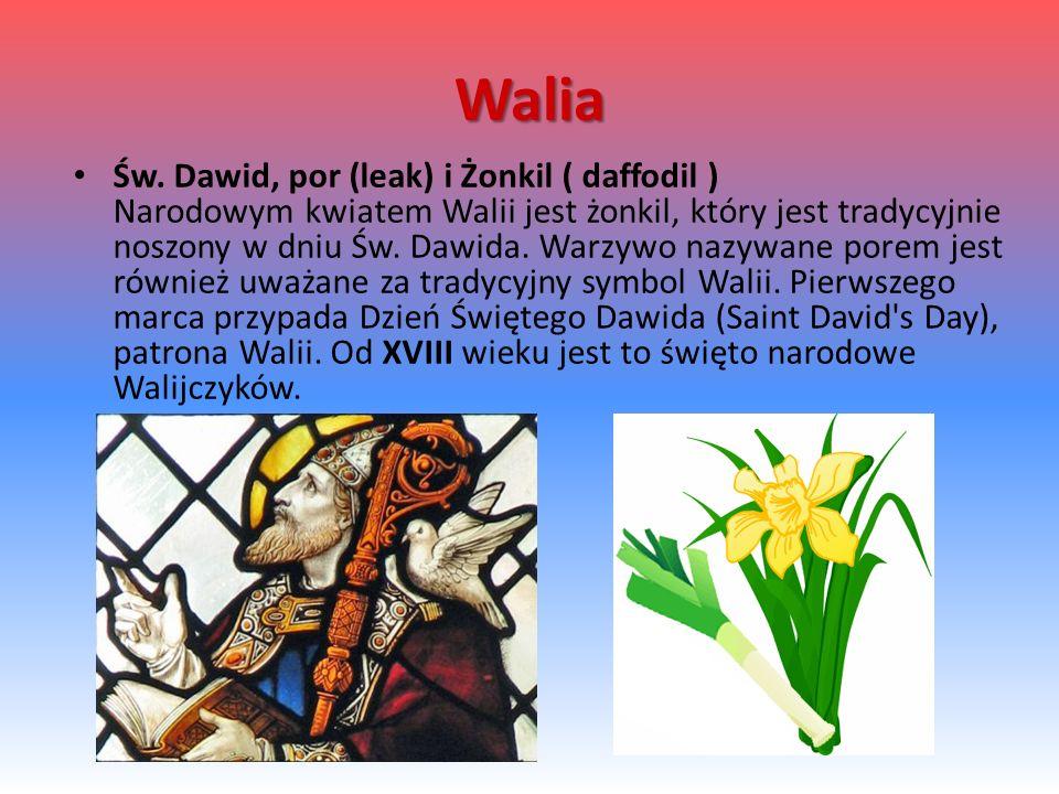 Walia Św.
