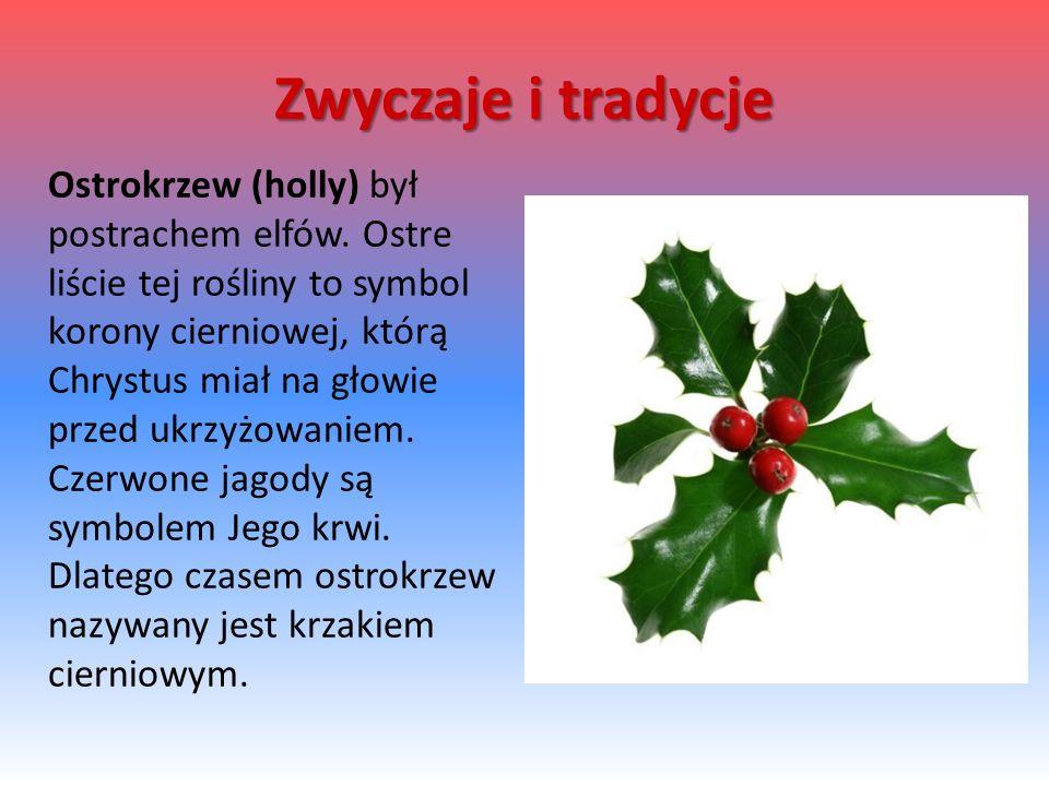 Ostrokrzew (holly) był postrachem elfów.