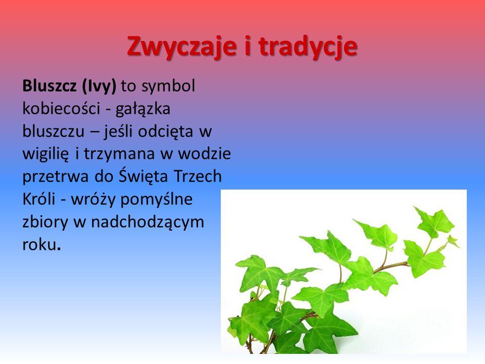 Bluszcz (Ivy) to symbol kobiecości - gałązka bluszczu – jeśli odcięta w wigilię i trzymana w wodzie przetrwa do Święta Trzech Króli - wróży pomyślne zbiory w nadchodzącym roku.