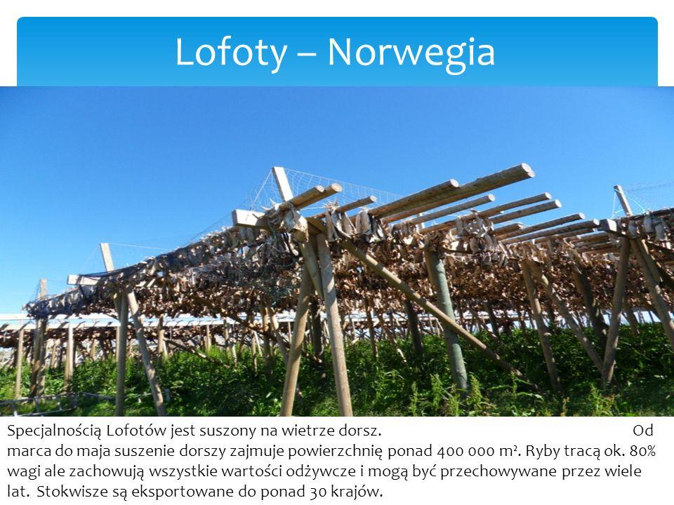 Lofoty – Norwegia Specjalnością Lofotów jest suszony na wietrze dorsz.