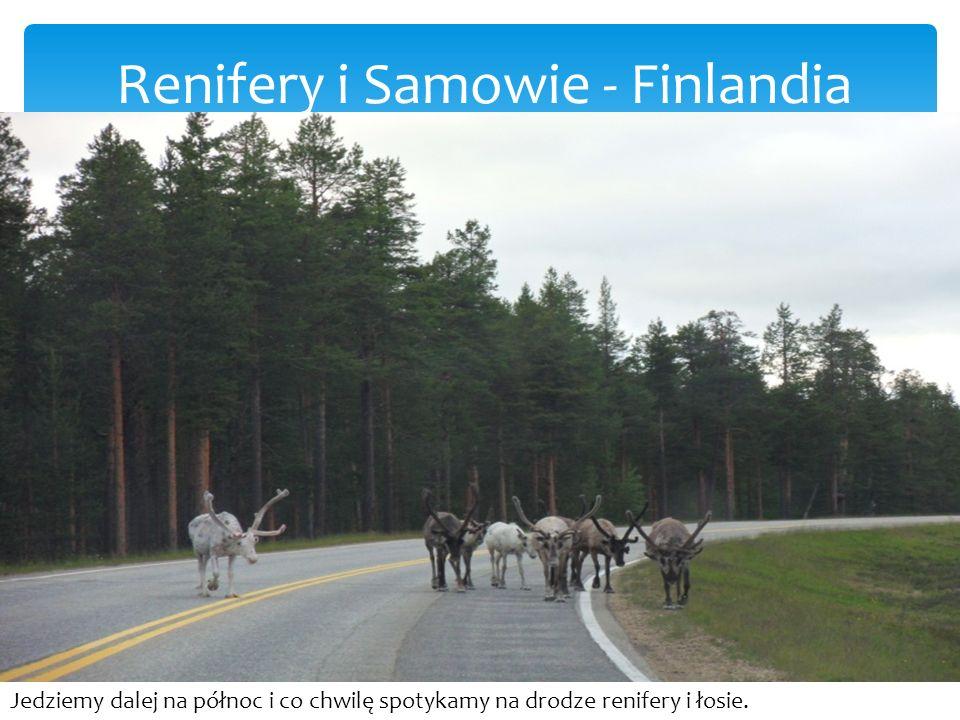 Renifery i Samowie - Finlandia Jedziemy dalej na północ i co chwilę spotykamy na drodze renifery i łosie.