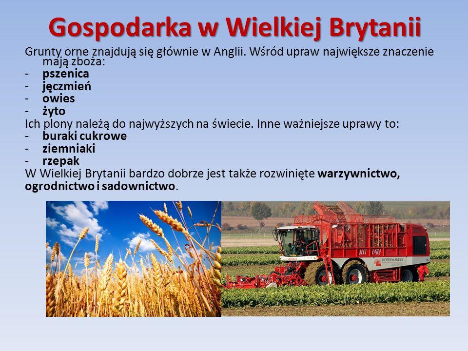 Hodowla Pomimo wszystko, rolnictwo zajmuje drugorzędne miejsce w gospodarce brytyjskiej.