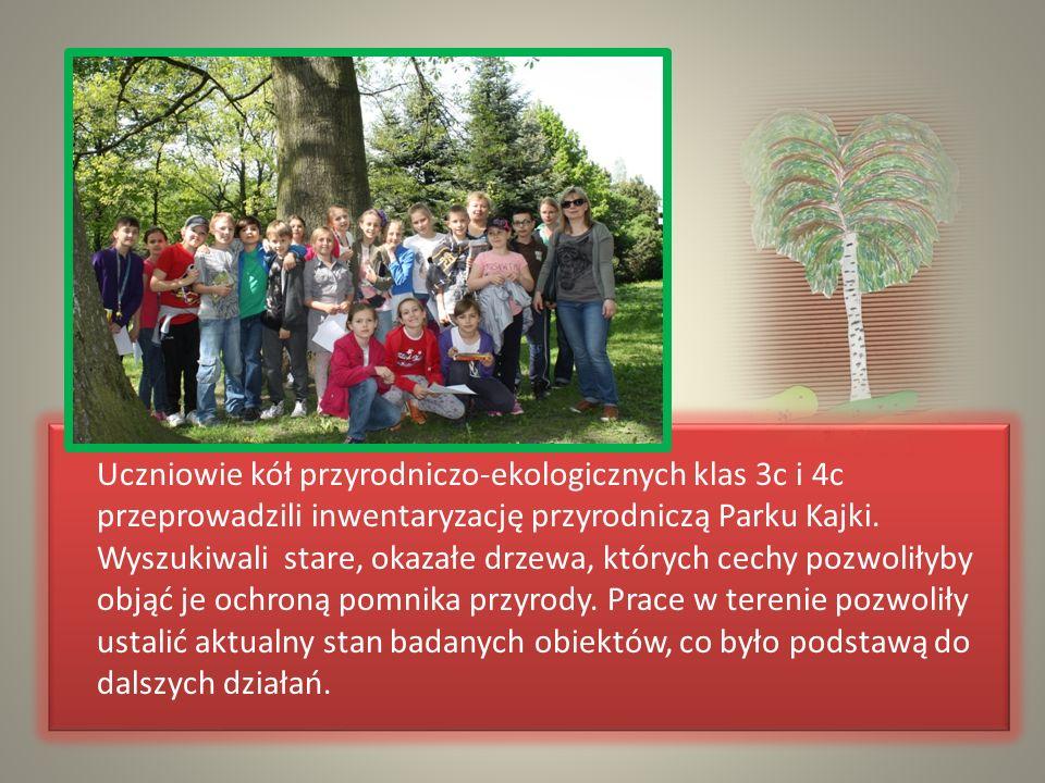 Uczniowie kół przyrodniczo-ekologicznych klas 3c i 4c przeprowadzili inwentaryzację przyrodniczą Parku Kajki. Wyszukiwali stare, okazałe drzewa, który