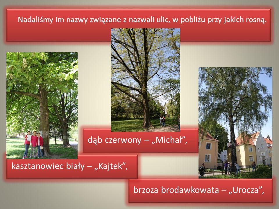 Nadaliśmy im nazwy związane z nazwali ulic, w pobliżu przy jakich rosną. Nadaliśmy im nazwy związane z nazwali ulic, w pobliżu przy jakich rosną. brzo