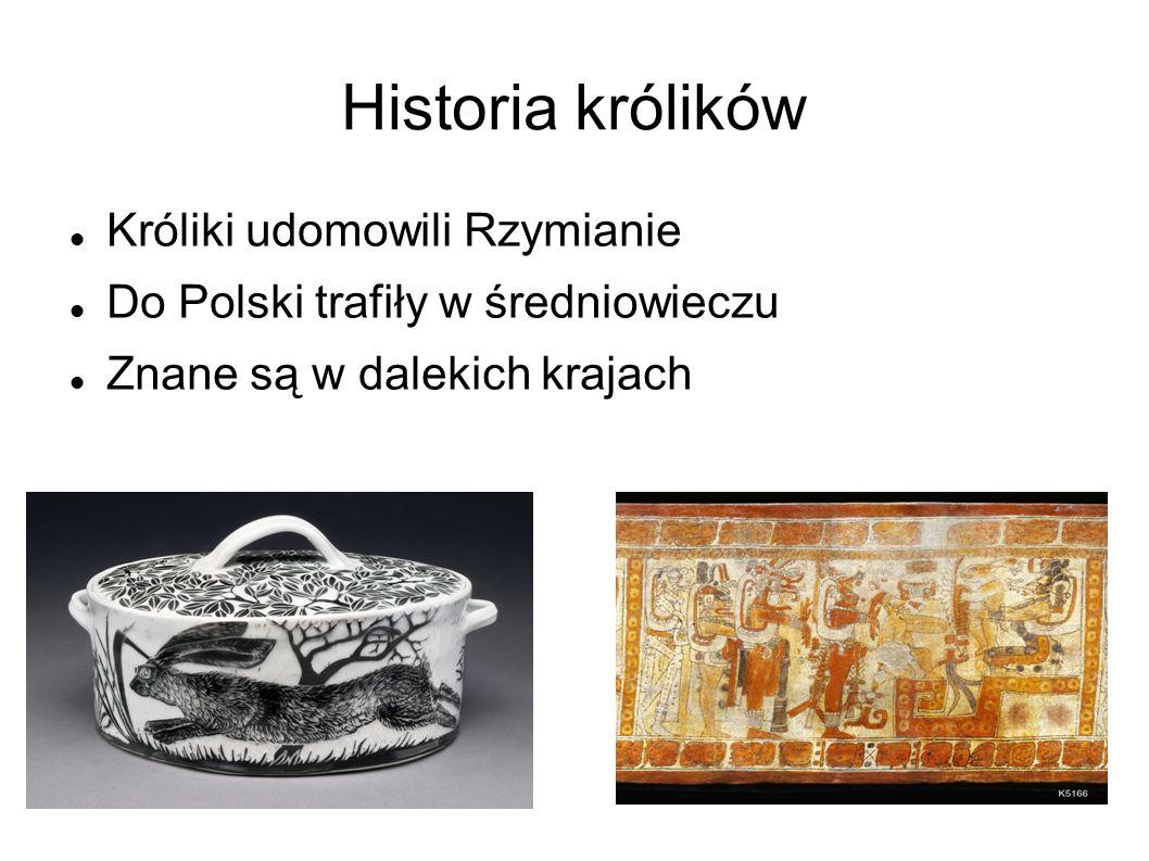 Historia królików Króliki udomowili Rzymianie Do Polski trafiły w średniowieczu Znane są w dalekich krajach