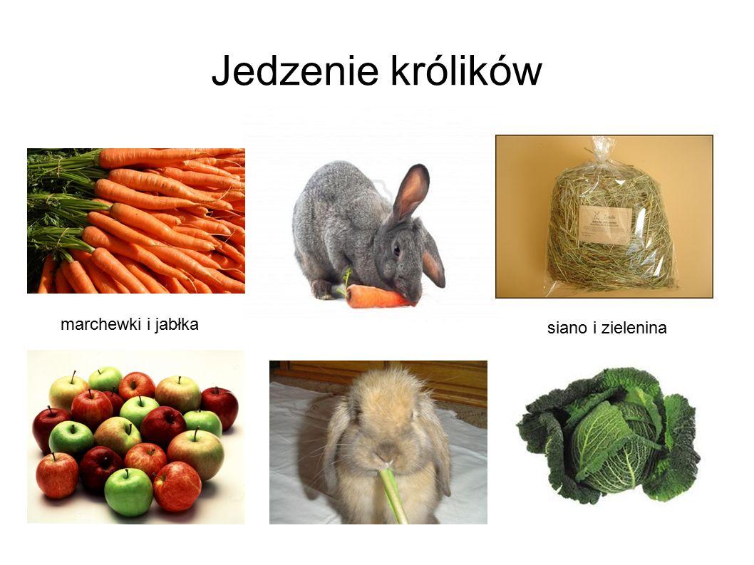 Jedzenie królików marchewki i jabłka siano i zielenina