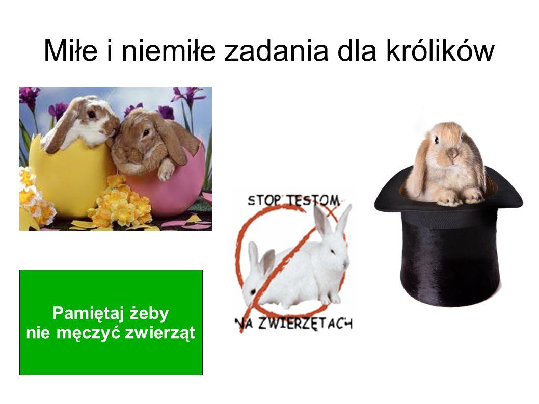 Miłe i niemiłe zadania dla królików Pamiętaj żeby nie męczyć zwierząt