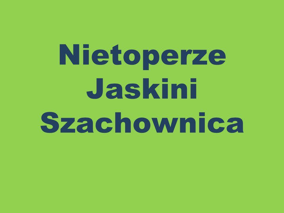 Nocek rudy Gatunek ssaka z rzędu nietoperzy, pospolity w całej Polsce, z wyjątkiem terenów ubogich w zbiorniki i cieki wodne.