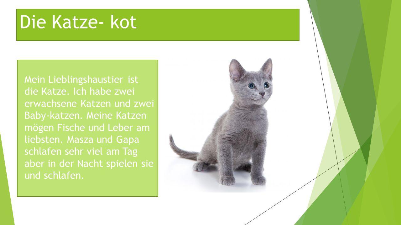 Die Katze- kot Mein Lieblingshaustier ist die Katze. Ich habe zwei erwachsene Katzen und zwei Baby-katzen. Meine Katzen mögen Fische und Leber am lieb
