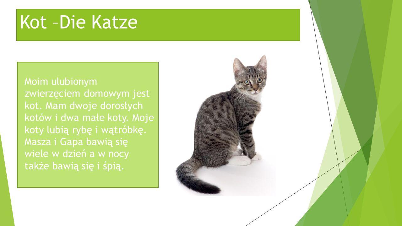 Kot –Die Katze Moim ulubionym zwierzęciem domowym jest kot. Mam dwoje dorosłych kotów i dwa małe koty. Moje koty lubią rybę i wątróbkę. Masza i Gapa b