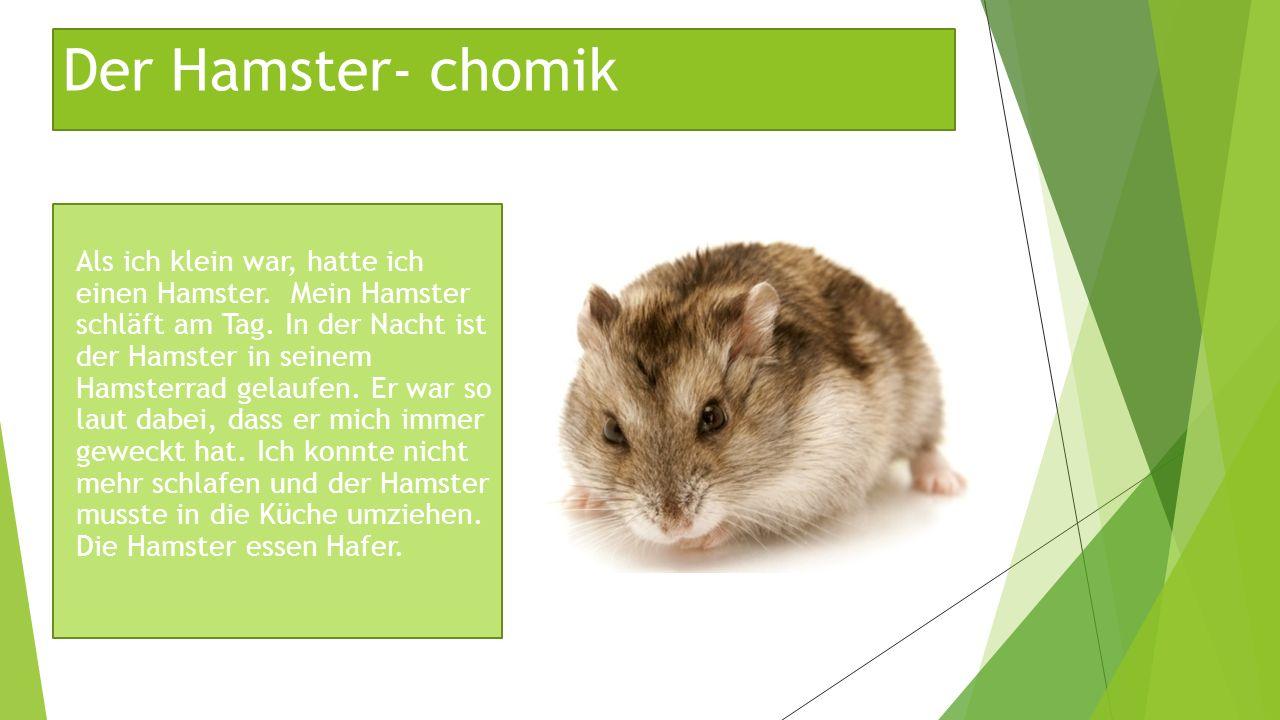 Der Hamster- chomik Als ich klein war, hatte ich einen Hamster. Mein Hamster schläft am Tag. In der Nacht ist der Hamster in seinem Hamsterrad gelaufe