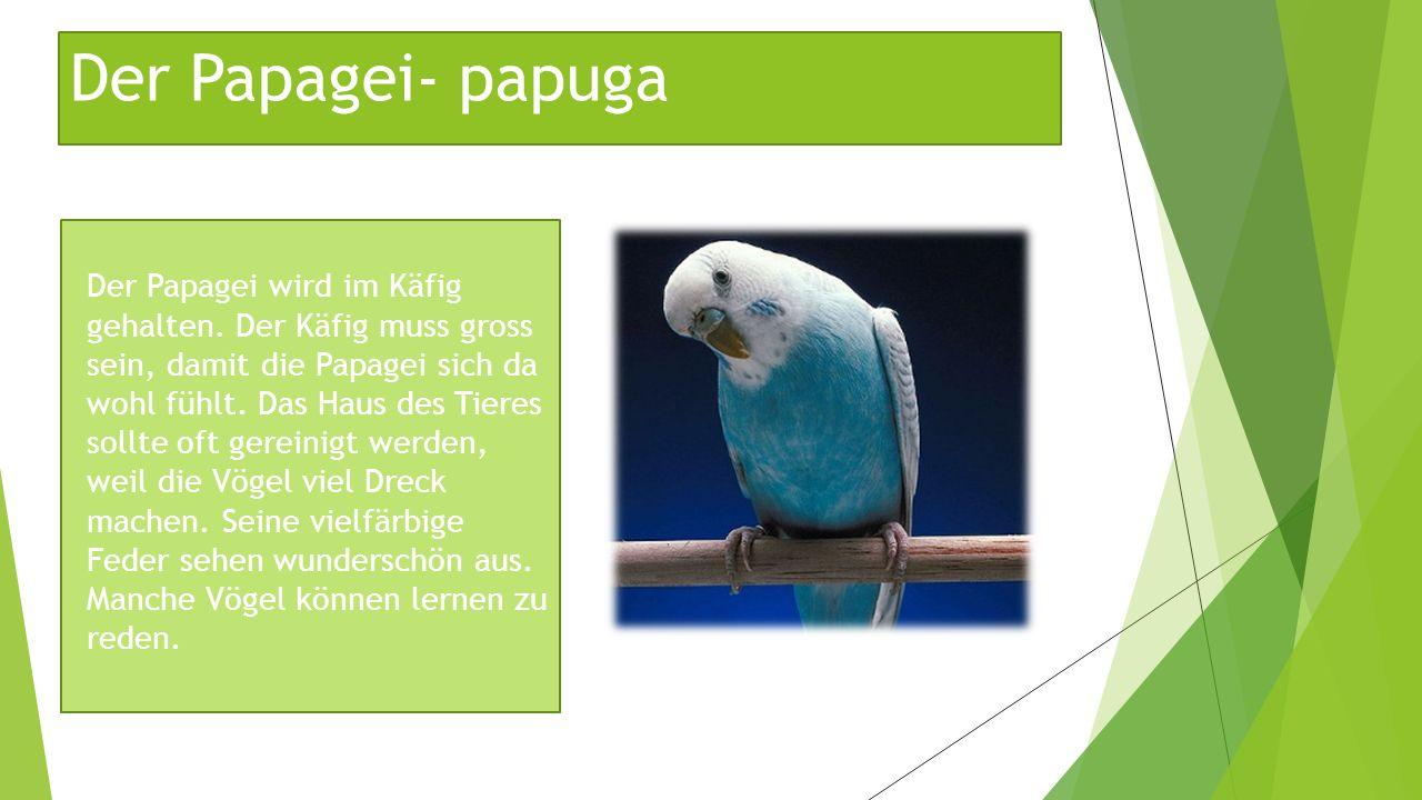 Der Papagei- papuga Der Papagei wird im Käfig gehalten. Der Käfig muss gross sein, damit die Papagei sich da wohl fühlt. Das Haus des Tieres sollte of