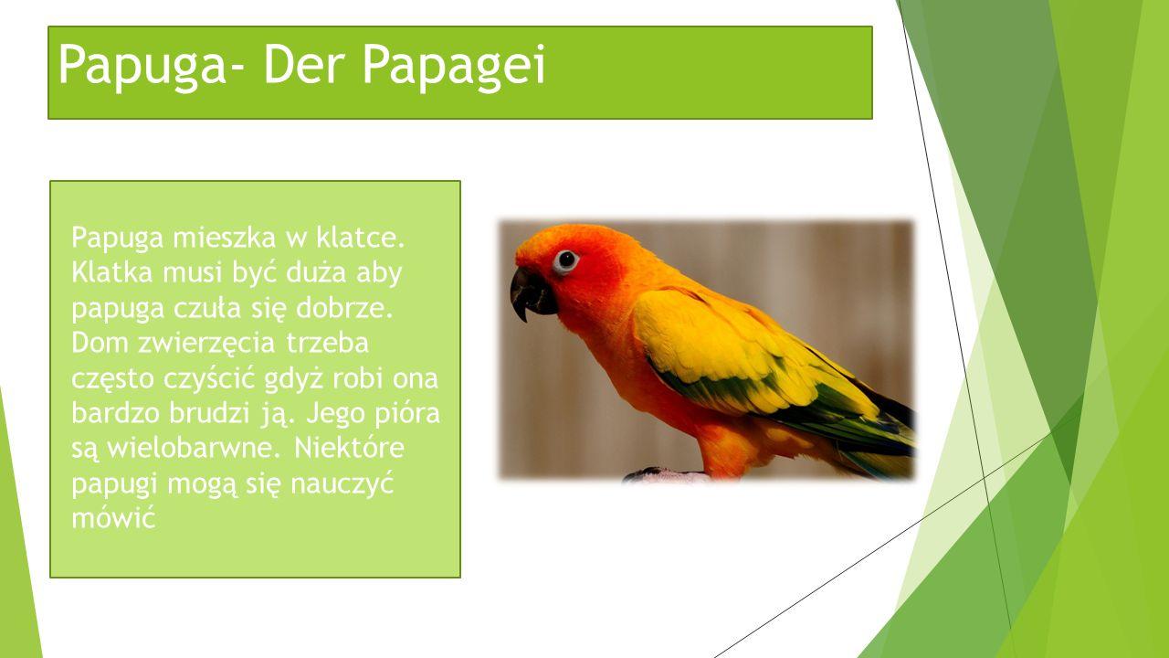 Papuga- Der Papagei Papuga mieszka w klatce. Klatka musi być duża aby papuga czuła się dobrze. Dom zwierzęcia trzeba często czyścić gdyż robi ona bard