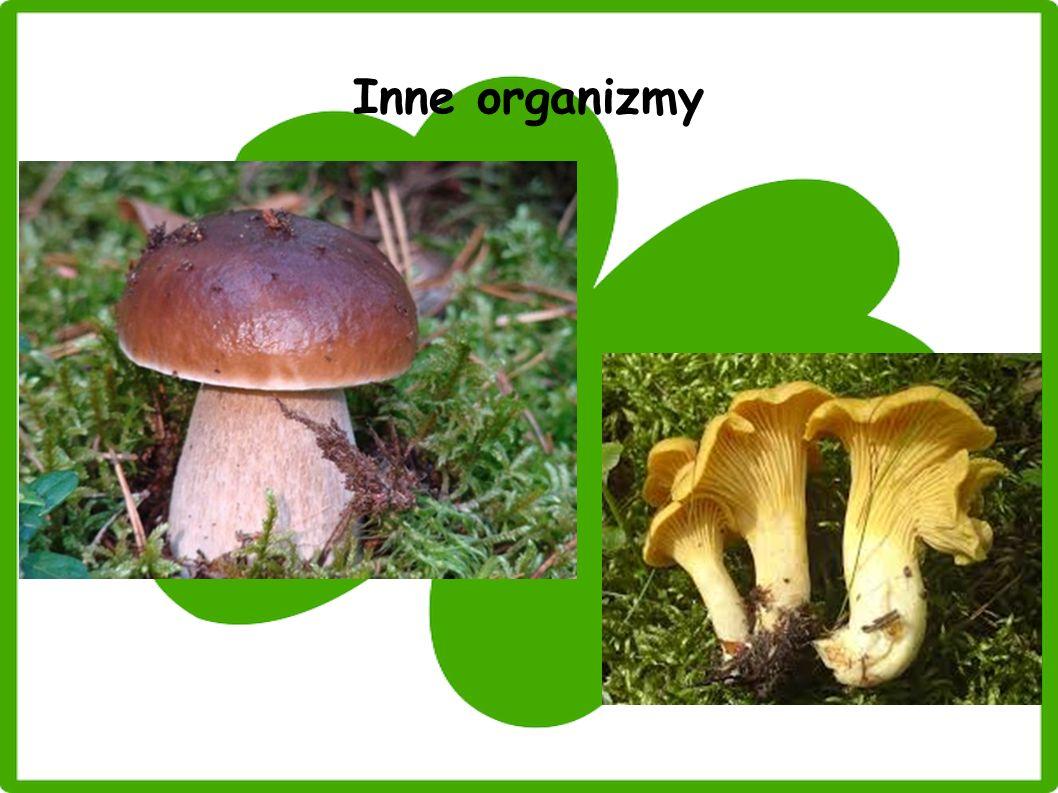 Inne organizmy
