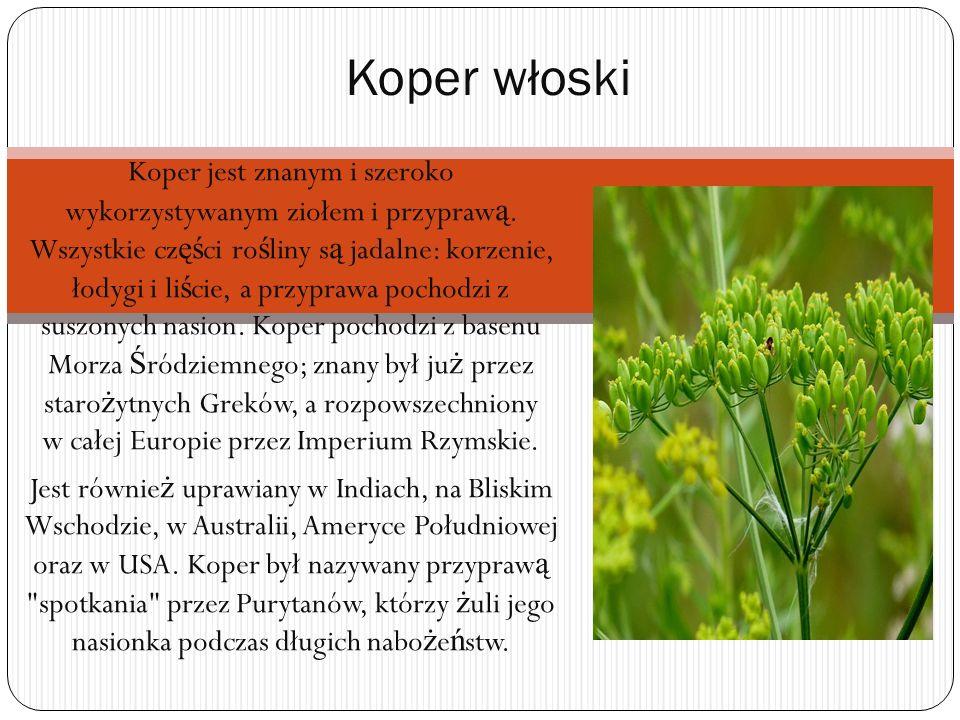 Koper jest znanym i szeroko wykorzystywanym ziołem i przypraw ą. Wszystkie cz ęś ci ro ś liny s ą jadalne: korzenie, łodygi i li ś cie, a przyprawa po