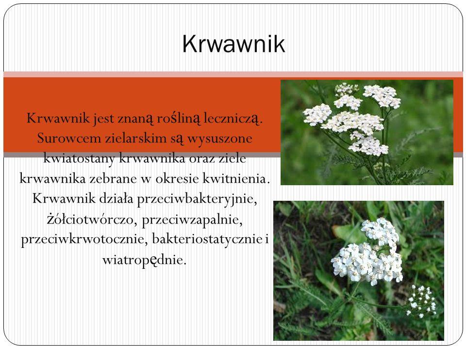 Krwawnik jest znan ą ro ś lin ą lecznicz ą. Surowcem zielarskim s ą wysuszone kwiatostany krwawnika oraz ziele krwawnika zebrane w okresie kwitnienia.