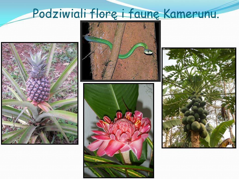 Podziwiali florę i faunę Kamerunu.