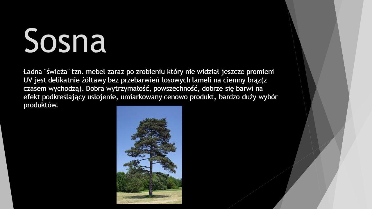 Sosna Ładna