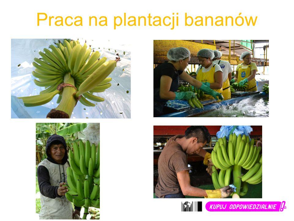 Praca na plantacji bananów