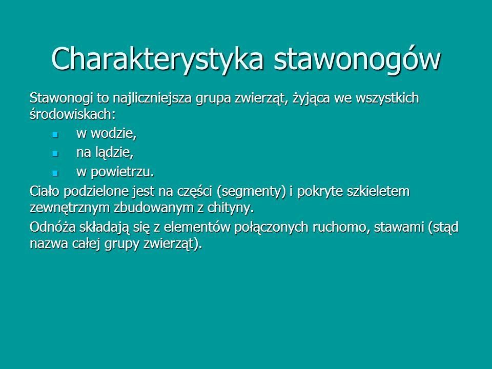 Charakterystyka stawonogów Stawonogi to najliczniejsza grupa zwierząt, żyjąca we wszystkich środowiskach: w wodzie, w wodzie, na lądzie, na lądzie, w