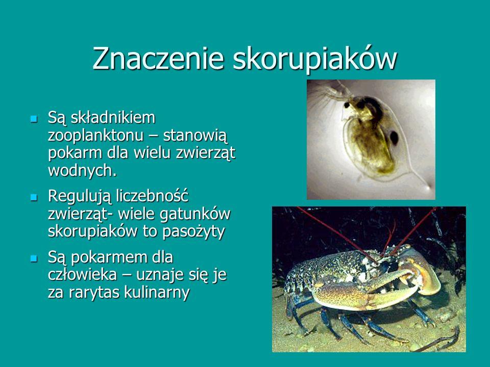 Znaczenie skorupiaków Są składnikiem zooplanktonu – stanowią pokarm dla wielu zwierząt wodnych. Są składnikiem zooplanktonu – stanowią pokarm dla wiel