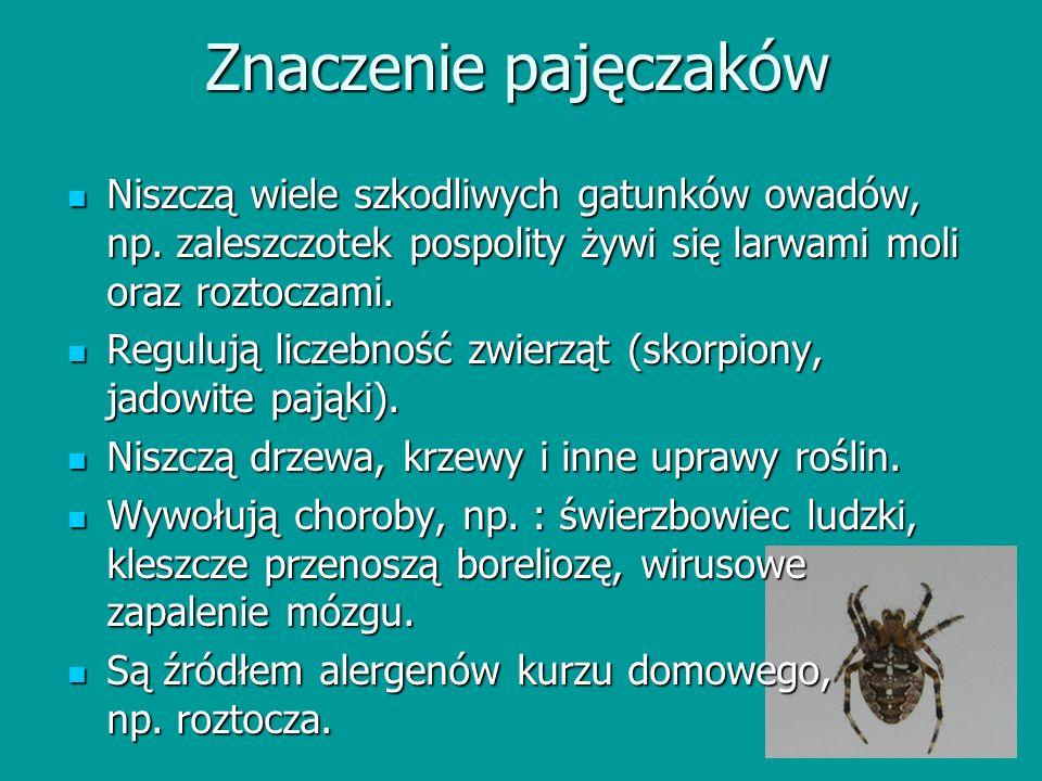 Znaczenie pajęczaków Niszczą wiele szkodliwych gatunków owadów, np. zaleszczotek pospolity żywi się larwami moli oraz roztoczami. Niszczą wiele szkodl