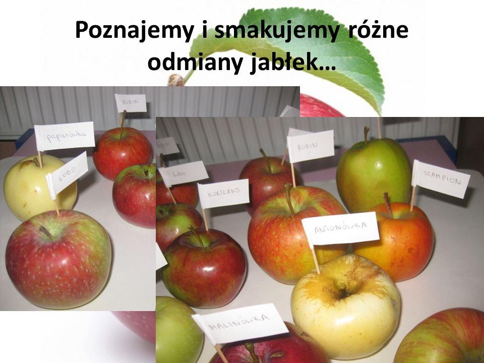 Poznajemy i smakujemy różne odmiany jabłek…