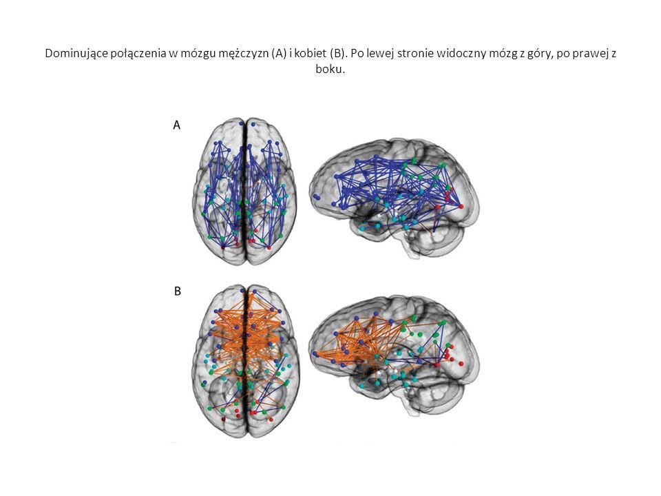 Dominujące połączenia w mózgu mężczyzn (A) i kobiet (B).