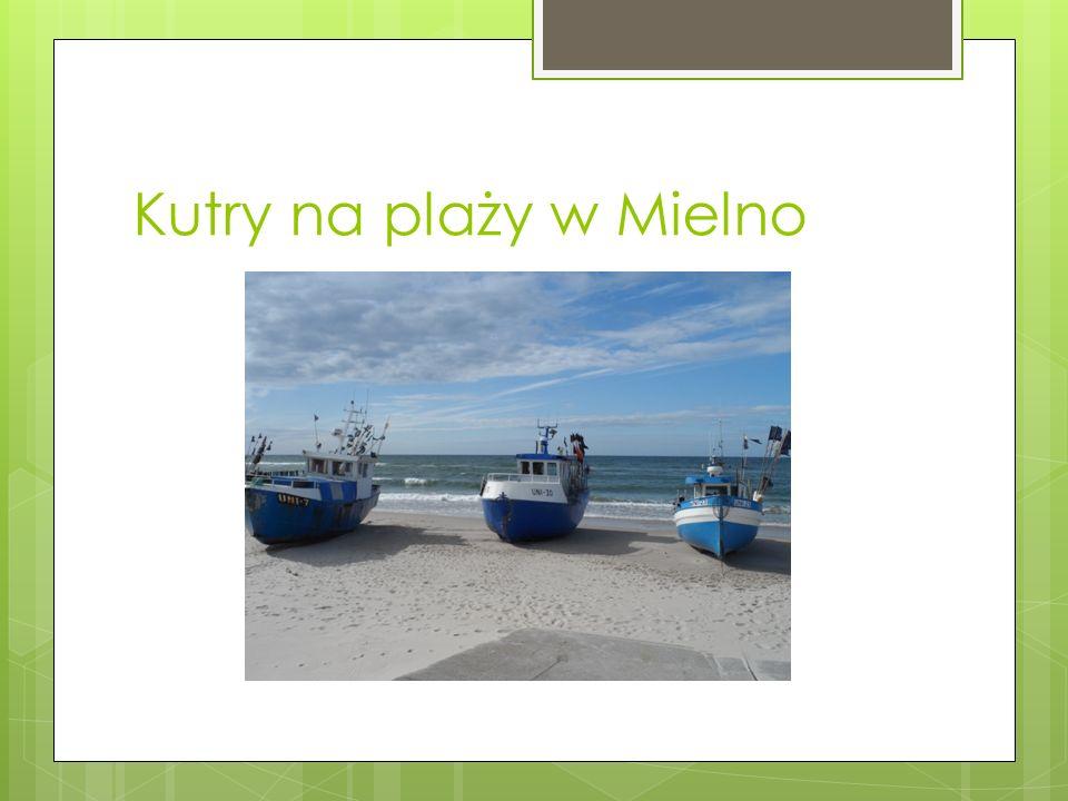 Kutry na plaży w Mielno