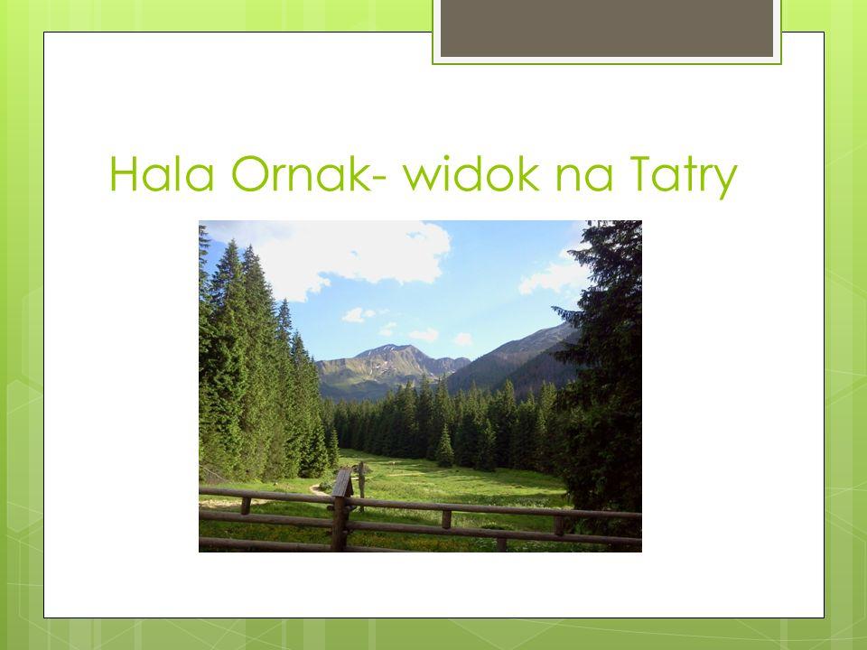 Hala Ornak- widok na Tatry