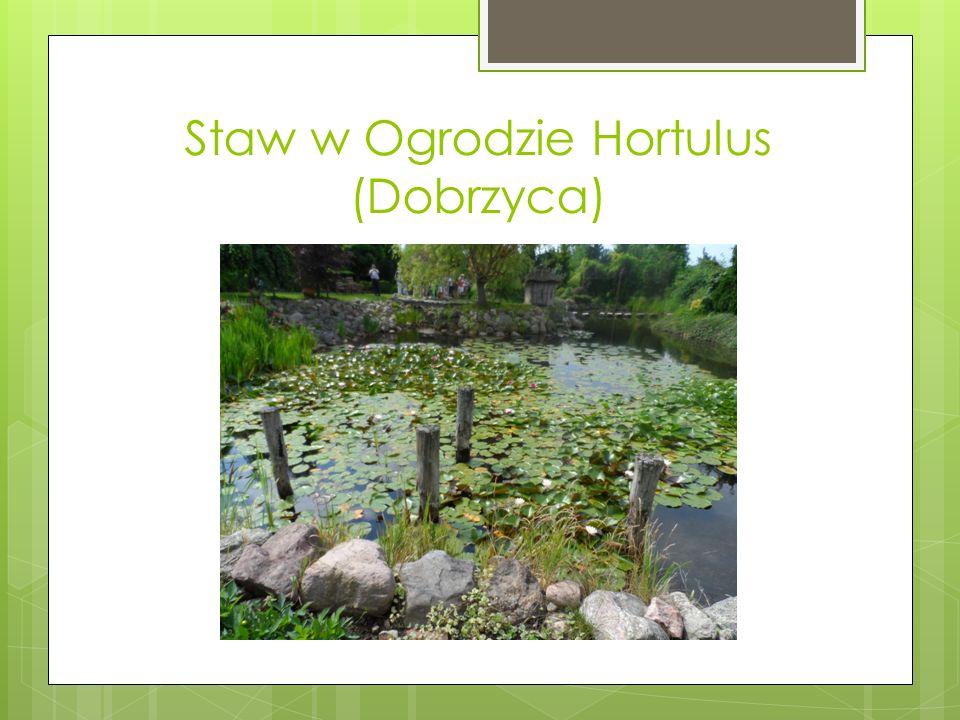 Staw w Ogrodzie Hortulus (Dobrzyca)