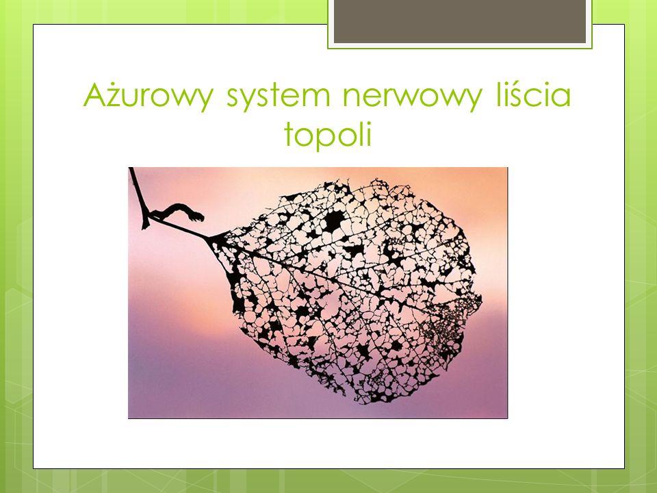 Ażurowy system nerwowy liścia topoli