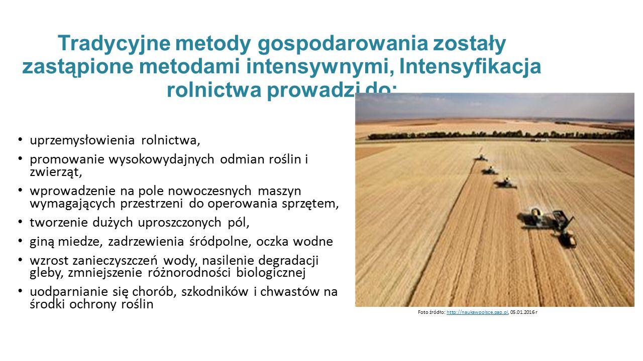 Tradycyjne metody gospodarowania zostały zastąpione metodami intensywnymi, Intensyfikacja rolnictwa prowadzi do: uprzemysłowienia rolnictwa, promowanie wysokowydajnych odmian roślin i zwierząt, wprowadzenie na pole nowoczesnych maszyn wymagających przestrzeni do operowania sprzętem, tworzenie dużych uproszczonych pól, giną miedze, zadrzewienia śródpolne, oczka wodne wzrost zanieczyszczeń wody, nasilenie degradacji gleby, zmniejszenie różnorodności biologicznej uodparnianie się chorób, szkodników i chwastów na środki ochrony roślin Foto źródło: http://naukawpolsce.pap.pl, 05.01.2016 rhttp://naukawpolsce.pap.pl