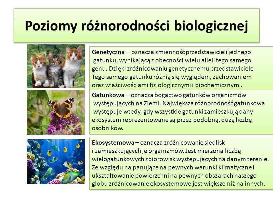 Poziomy różnorodności biologicznej Genetyczna – oznacza zmienność przedstawicieli jednego gatunku, wynikającą z obecności wielu alleli tego samego genu.