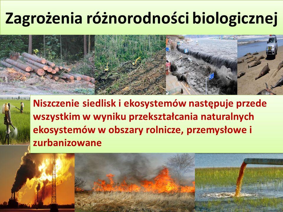 Zagrożenia różnorodności biologicznej Niszczenie siedlisk i ekosystemów następuje przede wszystkim w wyniku przekształcania naturalnych ekosystemów w obszary rolnicze, przemysłowe i zurbanizowane