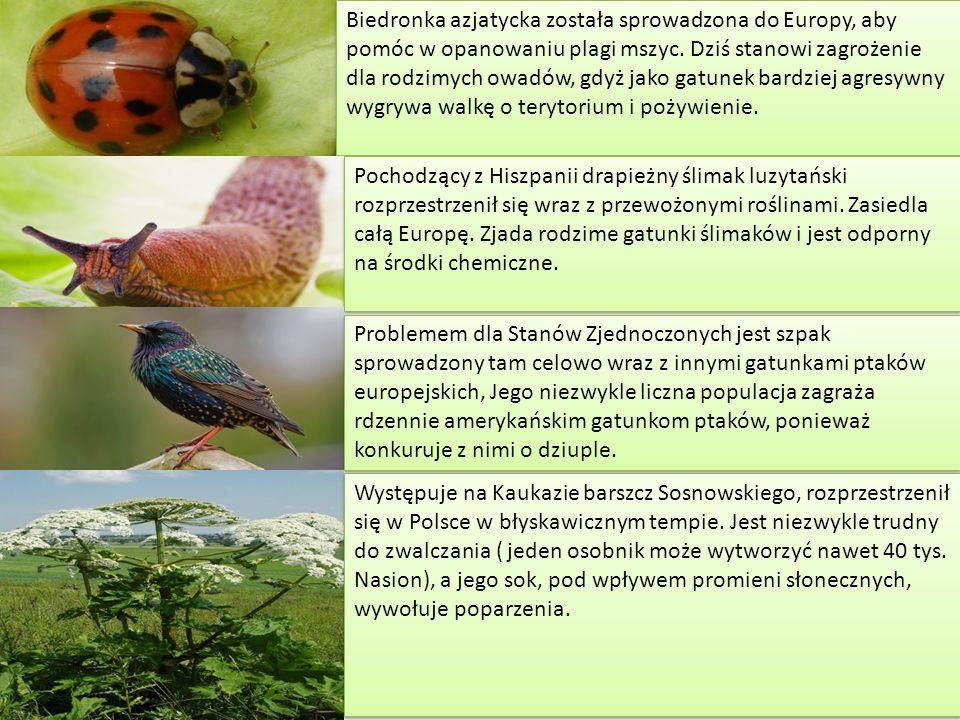 Rezerwat przyrody Rezerwaty przyrody są tworzone w celu ochrony ekosystemów, siedlisk zagrożonych wyginięciem gatunków oraz składników przyrody nieożywionej.
