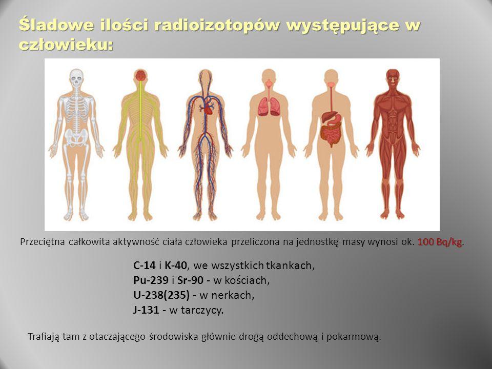 Śladowe ilości radioizotopów występujące w człowieku: 100 Bq/kg Przeciętna całkowita aktywność ciała człowieka przeliczona na jednostkę masy wynosi ok