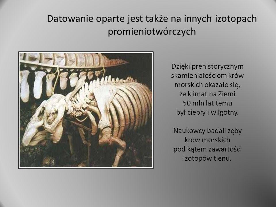 Dzięki prehistorycznym skamieniałościom krów morskich okazało się, że klimat na Ziemi 50 mln lat temu był ciepły i wilgotny. Naukowcy badali zęby krów