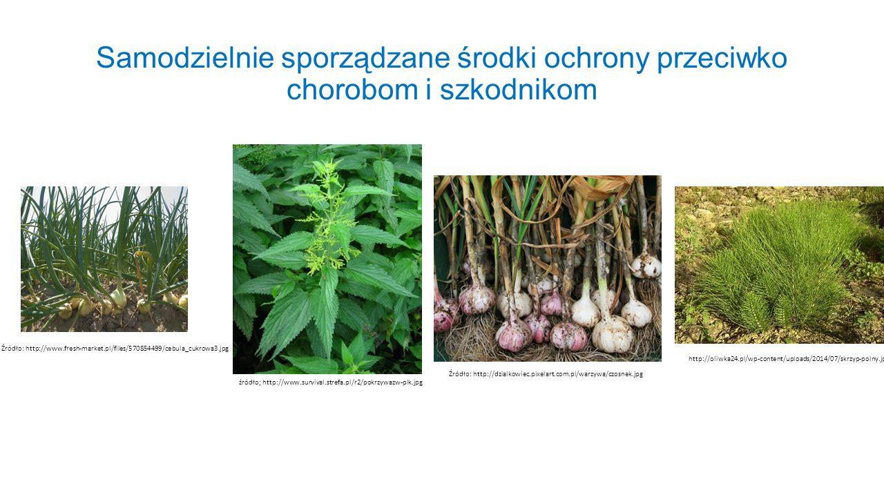 Samodzielnie sporządzane środki ochrony przeciwko chorobom i szkodnikom Źródło: http://www.fresh-market.pl/files/570854499/cebula_cukrowa3.jpg źródło;