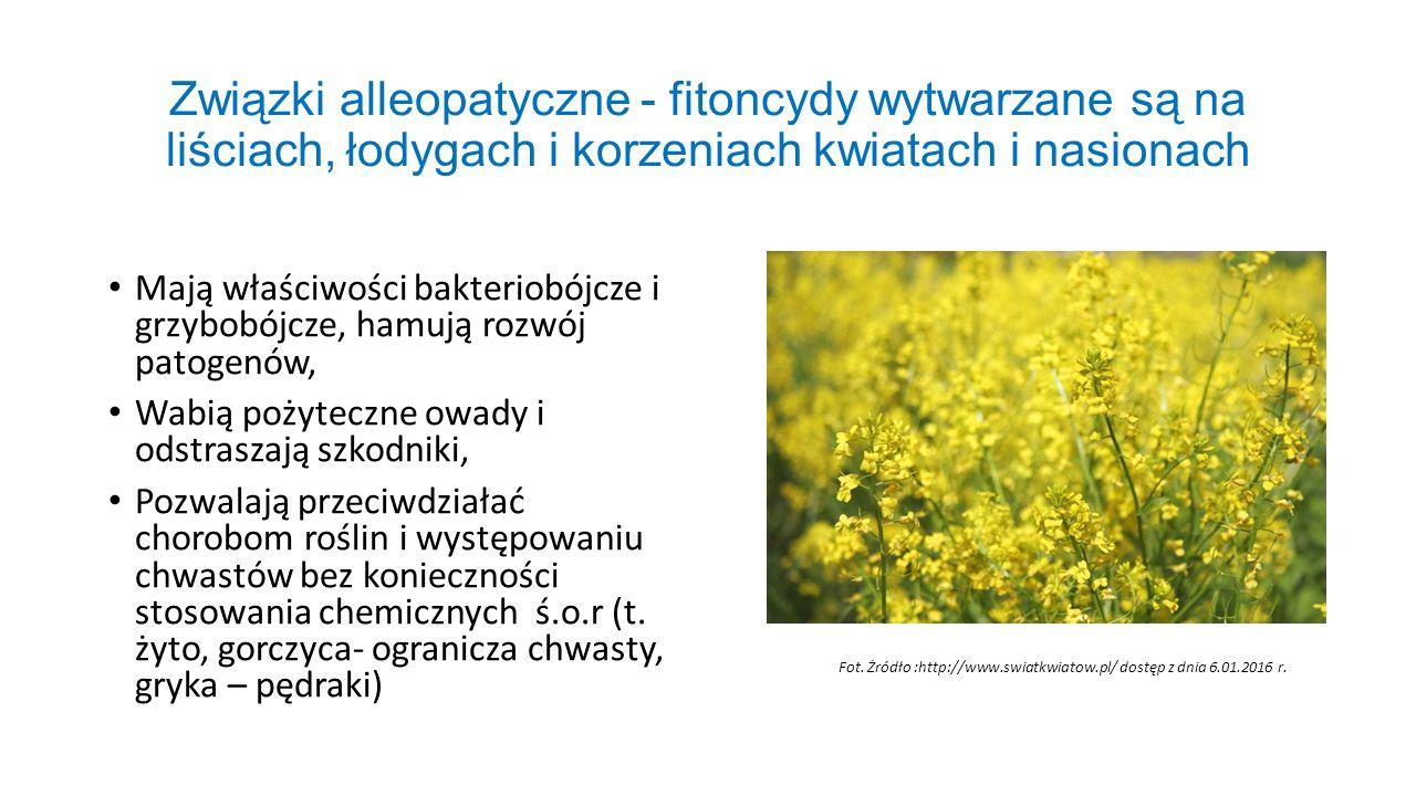 Związki alleopatyczne - fitoncydy wytwarzane są na liściach, łodygach i korzeniach kwiatach i nasionach Mają właściwości bakteriobójcze i grzybobójcze