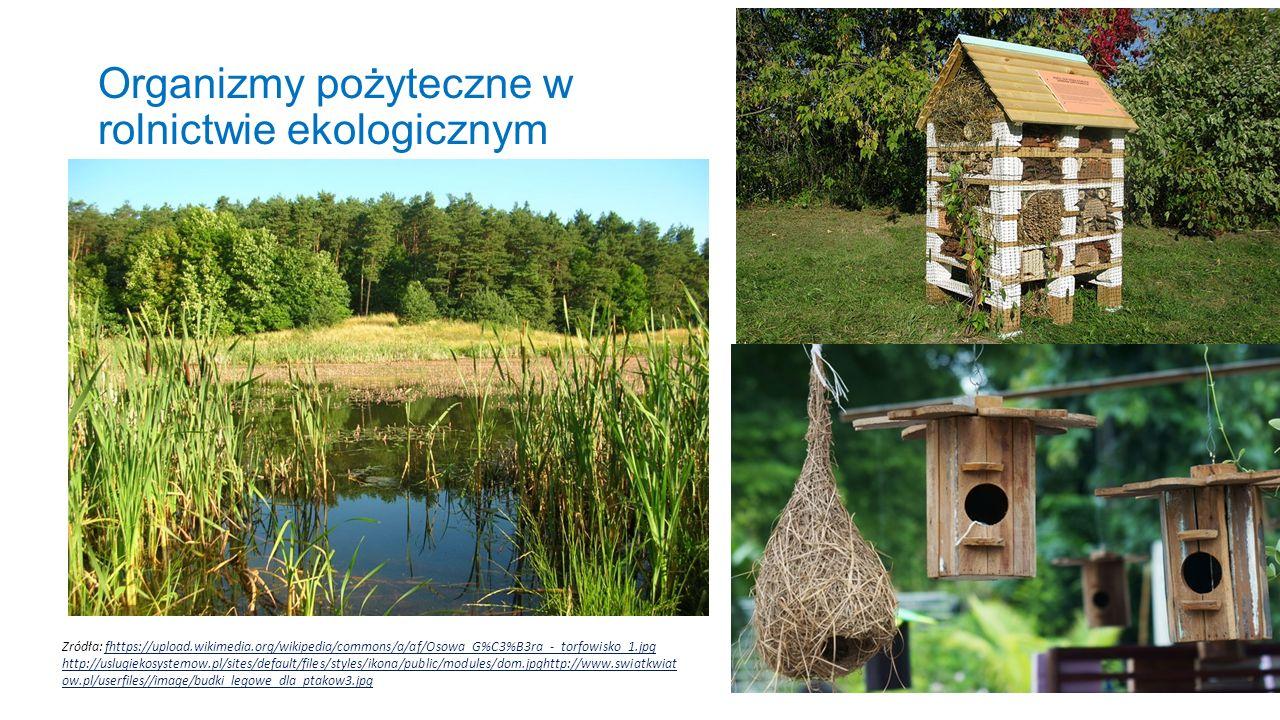 Organizmy pożyteczne w rolnictwie ekologicznym Zródła: fhttps://upload.wikimedia.org/wikipedia/commons/a/af/Osowa_G%C3%B3ra_-_torfowisko_1.jpg http://