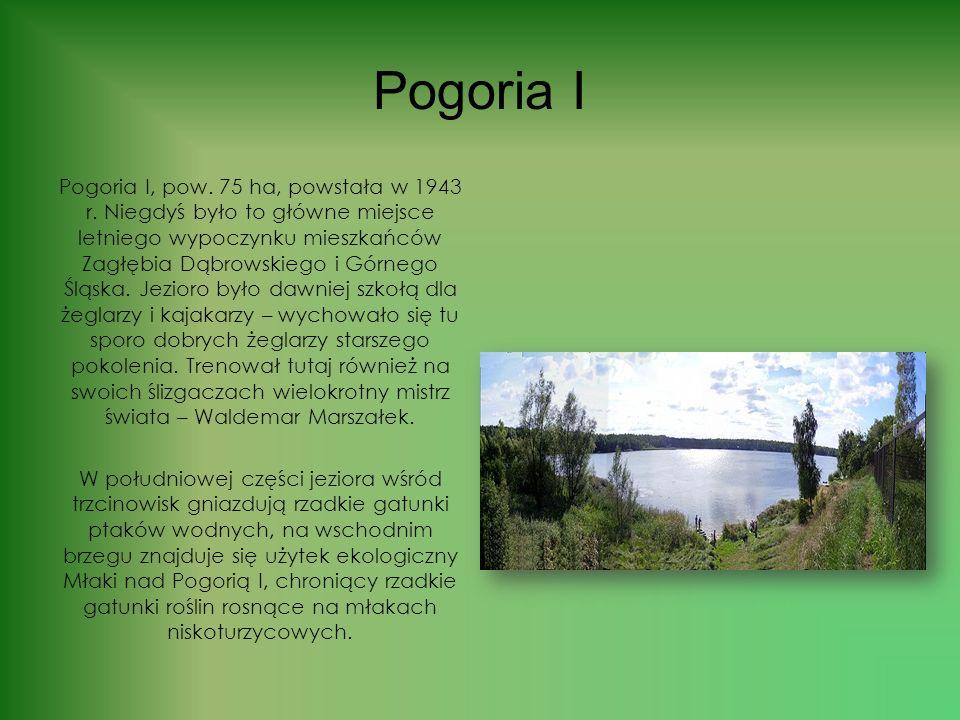 Pojezierze Dąbrowskie Pogorie; zespół zbiorników wodnych w Dąbrowie Górniczej, będących zalanymi wyrobiskami piasku podsadzkowego wydobywanego niegdyś
