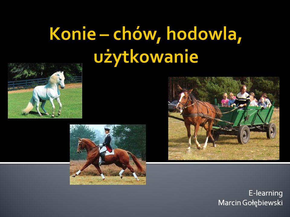 Udomowienie – VI-V w p.n.e.