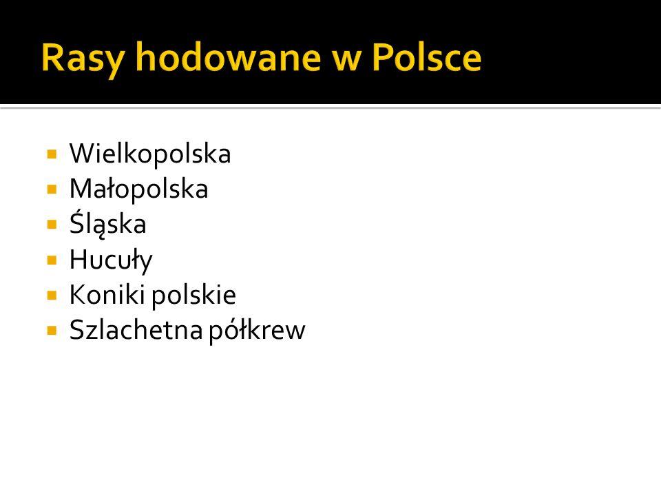 Wielkopolska Małopolska Śląska Hucuły Koniki polskie Szlachetna półkrew