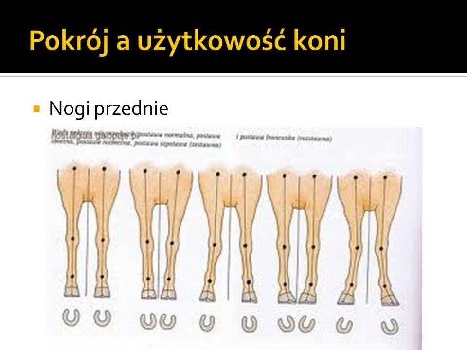 Nogi zadnie