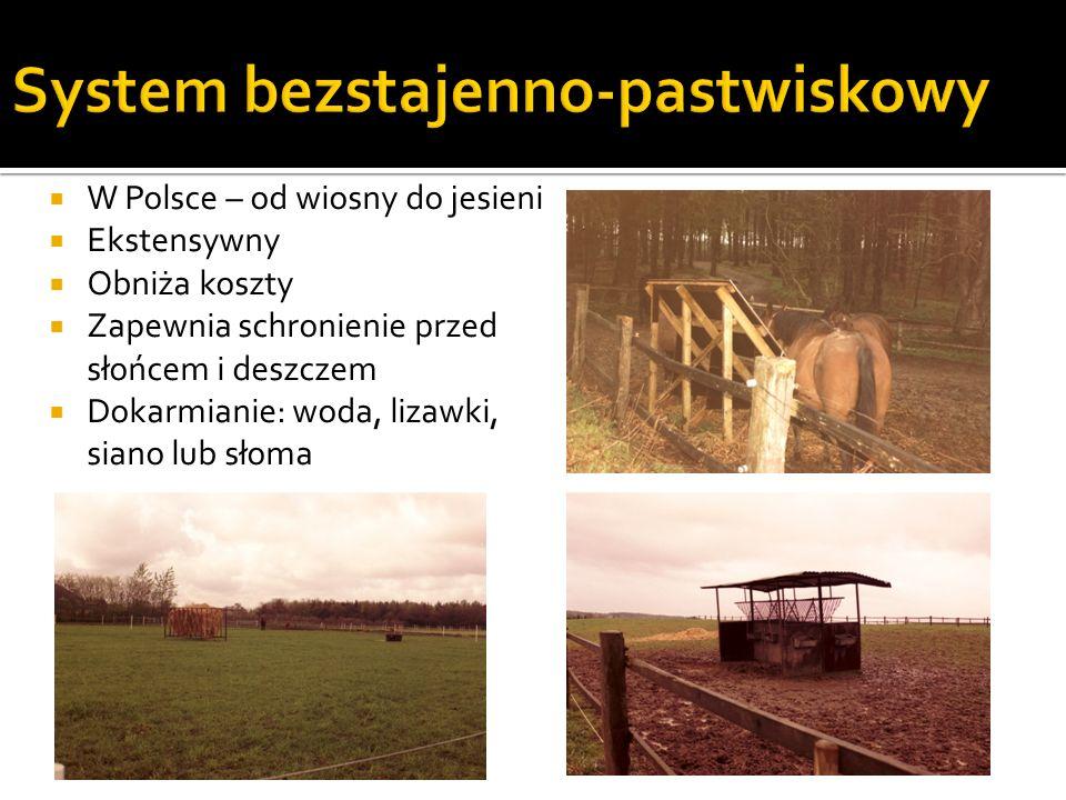 1,2 ha pastwiska na klacz ze źrebięciem (wypas kontrolowany) Nadzór