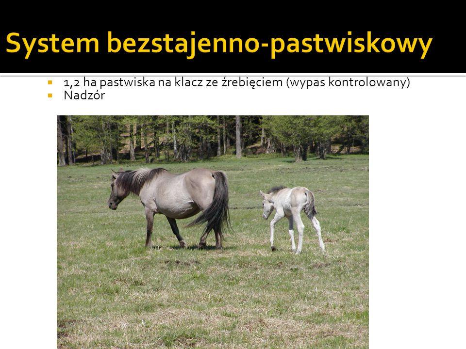 Indywidualny system utrzymania koni System stanowiskowy Koń stoi uwiązany Nie jest właściwy z punktu widzenia dobrostanu i potrzeb koni 1x/dzień koń kładzie się na boku – niemożliwe w stanowisku Przy wstawaniu koń prostuje przednie nogi – koń musi mieć przestrzeń przed sobą Stosowany z przyczyn ekonomicznych Stanowiska – pojedyncze, podwójne lub na większą liczbę koni Konie utrzymywane na stanowiska muszą mieć zapewnioną dużą ilość ruchu na swobodzie, w kontakcie z innymi końmi