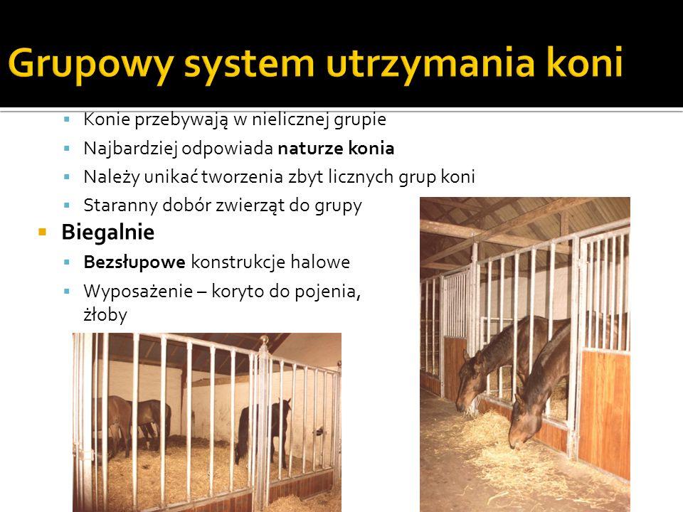 Powierzchnia przewidziana na 1 konia o masie ciała 550 kg: Osobniki dorosłe: (2 x wysokość w kłębie) 2 Młode konie (% powierzchni przewidzianej dla dorosłego konia: 12-24 miesiące:75% 0-12 miesięcy:50% Minimum: 10 m 2 dla dorosłego konia, klaczy jałowej 15 m 2 dla klaczy ze źrebięciem Gdy pasze objętościowe i treściwe skarmiane są ze żłobów, należy zapewnić żłób o długości na 1 konia: 0,8 m na młodzież 0,9-1 m na klacz 1,5 m na klacz ze źrebięciem Jeśli powierzchnia stajni przewidziana dla koni jest zbyt mała, można ją powiększyć o przylegający do stajni wybieg, do którego konie będą miały swobodny dostęp poprzez otwarte drzwi