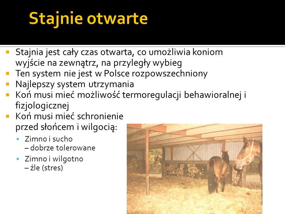 Stajnia jest cały czas otwarta, co umożliwia koniom wyjście na zewnątrz, na przyległy wybieg Ten system nie jest w Polsce rozpowszechniony Najlepszy s
